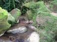 Ubud Monkey temple Indonesia