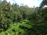 Ubud Rice Terrace, Indonesia