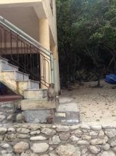 Monkey Island, Vietnam